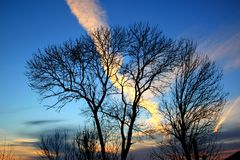 Trees and the sky in the sunset Royalty Free Stock Image