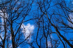 Trees sky. Tree branches on sky background Stock Photo