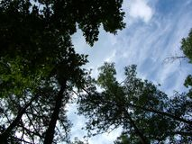 Trees and sky. Upward view of trees and sky from the hammock Stock Photo