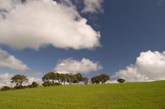 Trees on skyline Stock Image