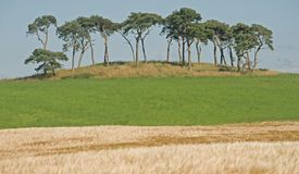 Trees on skyline. Royalty Free Stock Image