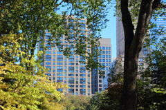 Trees with Skyscraper Background in Central Park Royalty Free Stock Photography