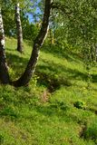 Trees on the slope in Eco Shore Park in Khimki, Russia Royalty Free Stock Image