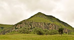Tree line hill Stock Photography