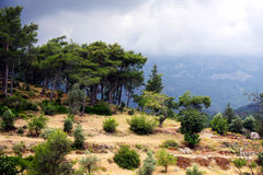 Trees on the slope of mountain. Kemer, Turkey. Stock Images