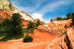 Trees on slopes of Zion Royalty Free Stock Photos
