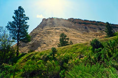 Trees on slopes of Zion Royalty Free Stock Photo