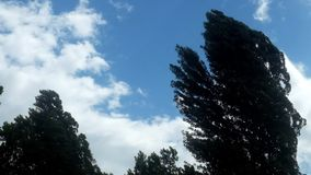 Trees and slowly clouds in the sky stock video