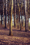 Trees. In a small forest Stock Images
