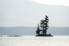 Trees on small island. Evergreen trees taking advantage of a small island on Moosehead Lake in Maine, USA Stock Photo