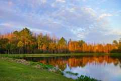 Trees and a small pond form perfect reflection at sunset Stock Image