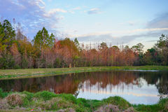 Trees and a small pond form perfect reflection at sunset Royalty Free Stock Image