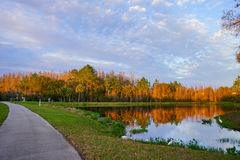 Trees and a small pond form perfect reflection at sunset Royalty Free Stock Photography