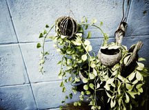 Trees on small pots made ​​from coconut shells. Royalty Free Stock Image