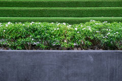 Trees and small white flowers in a large concrete or marble pots in public park. royalty free stock photos