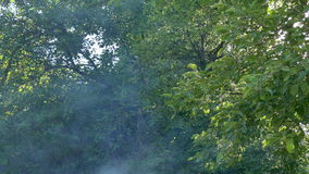Trees through the smoke and the heat stock footage