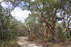Trees on sand track Stock Photo