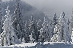 Trees with snow Stock Images