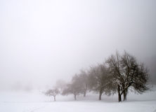 Trees in Snow Stock Images