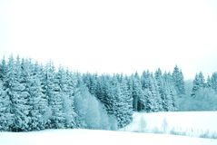 Trees with snow Stock Photos