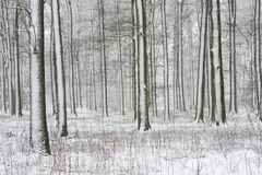 Trees with snow Royalty Free Stock Photos
