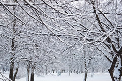 Trees in snow royalty free stock photos