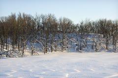 Trees in snow. Stock Photo