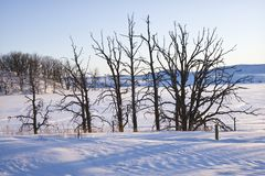 Trees in snow. Stock Images
