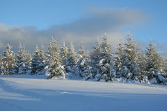 Trees with snow. Landscape of mountain showing fir tree vith snow Stock Photos