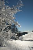 Trees with snow Royalty Free Stock Photography