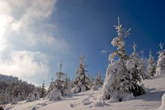 Trees with snow. Landscape of mountain showing trees vith snow Royalty Free Stock Photography