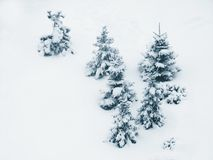 Trees / Snow Royalty Free Stock Photography