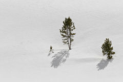 Trees in snow. On the hillside - just outside grand teton national park, wyoming Royalty Free Stock Images