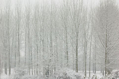 Trees in snow stock photography