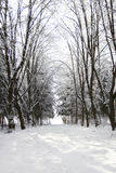 Trees in the snow in beautiful winter forest Stock Photo