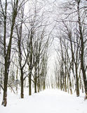 Trees in the snow in beautiful winter forest Royalty Free Stock Photos