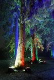 Trees in the snow. Big trees in the snow illuminated with colorful lights stock photos