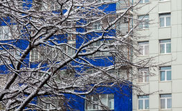 Trees with snow and building. Trees covered with snow and blue building with many windows Royalty Free Stock Image