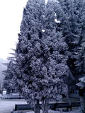 Trees in the snow in the city Stock Photography