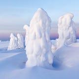 Trees in snow Stock Image
