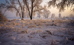 Trees with snow-covered branches, lit by the sun. Stock Photos