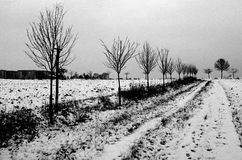 Trees in snow covered countryside Stock Images