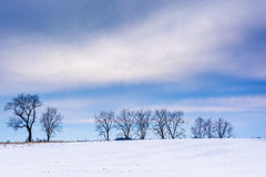 Trees on a snow covered field in rural Adams County, Pennsylvani Stock Photo