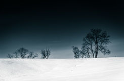 Trees on a snow covered hill in Seven Valleys, Pennsylvania. Stock Images