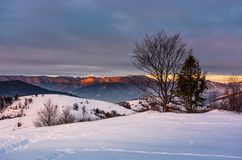 Trees on the snow covered hill at sunrise. Gorgeous mountain ridge with snowy top far in the distance Stock Photos