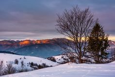 Trees on the snow covered hill at sunrise. Gorgeous mountain ridge with snowy top far in the distance Stock Image
