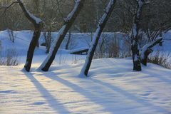 Trees on snow-covered meadow. Scene with trees on snow-covered meadow royalty free stock photography