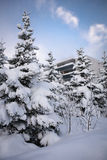 Trees in snow. Trees covered with snow in Reykjavik Royalty Free Stock Image