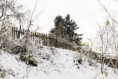 Trees in the snow Stock Photography