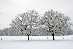 Trees in snow Stock Photos